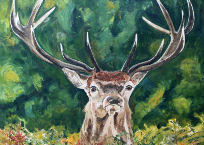 Wild Stag by Tanya Montandon