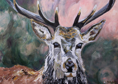 Stag by Tanya Montandon