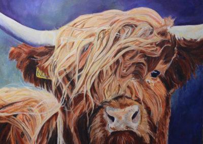 HIghland Calf by Tanya Montandon